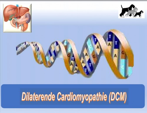 Dilaterende Cardiomyopathie (DCM)