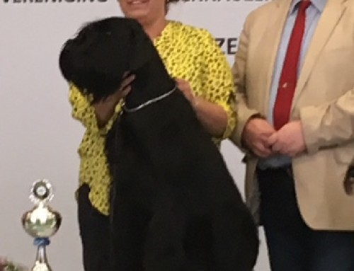 KCM 12 mei 2019 : Pepita Mousaro Best in Show